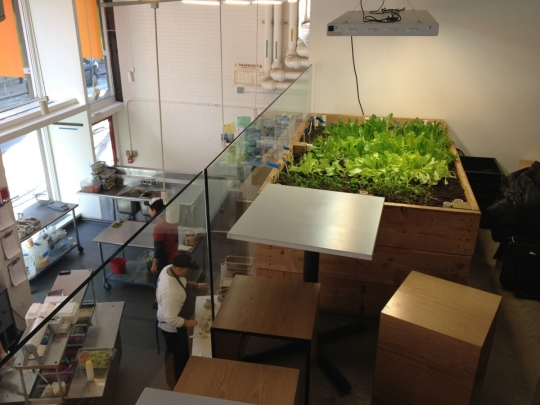 """Justin and Marco visit the salad garden at <a href=""""http://www.cloverfoodlab.com/"""">Clover food lab</a>."""